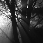 On Reverence – Brian J. Mason