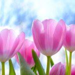 Resisting Praising Marvelous Things – Brian J. Mason