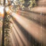 On Transcendentalism – Brian J. Mason