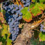 Of Faith and Love and Fire and Grapevines – by Brian J. Mason